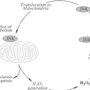 (PDF) Metabolic triad in brain aging: Mitochondria