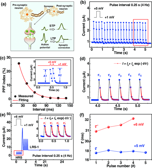 small resolution of stp and ltp behaviors emulated in cu annealed zns pt memristive synapses a