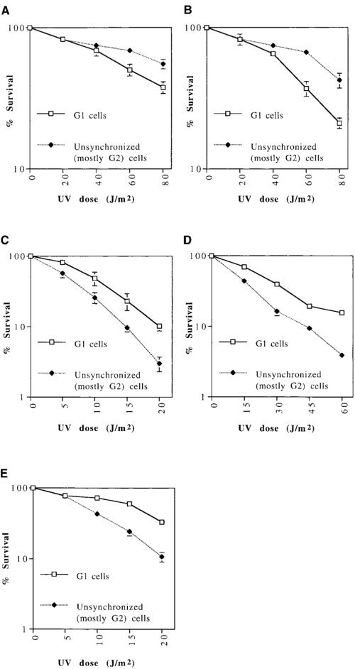 small resolution of uv sensitivity of cells synchronized in g 1 compared to unsynchronized mostly g 2 png