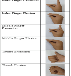 extension and flexion positions for index finger middle finger and thumb [ 850 x 952 Pixel ]