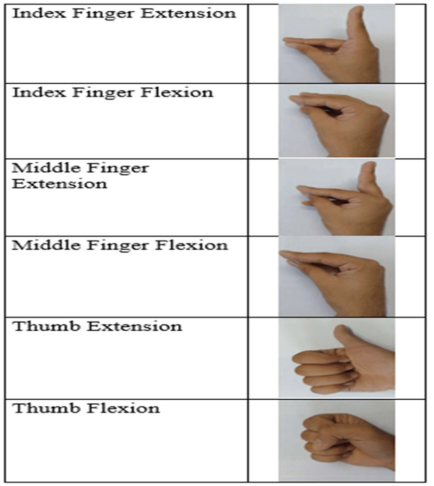 hight resolution of extension and flexion positions for index finger middle finger and thumb