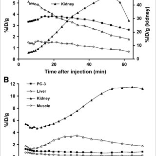 Comparison of internalization (A) and efflux rate (B) of