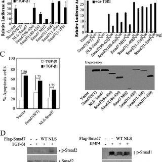 (PDF) Smad7 Antagonizes Transforming Growth Factor