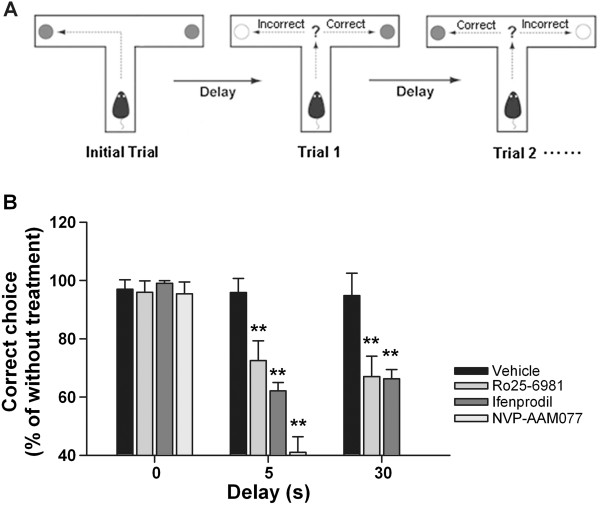 Effect of intra-CA1 inhibition of NR2B-NMDARs on delayed