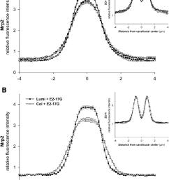 immunofluorescent intensity analysis of fluorescence profiles ofimmunofluorescent intensity analysis of fluorescence profiles of mrp2 download scientific [ 850 x 1185 Pixel ]