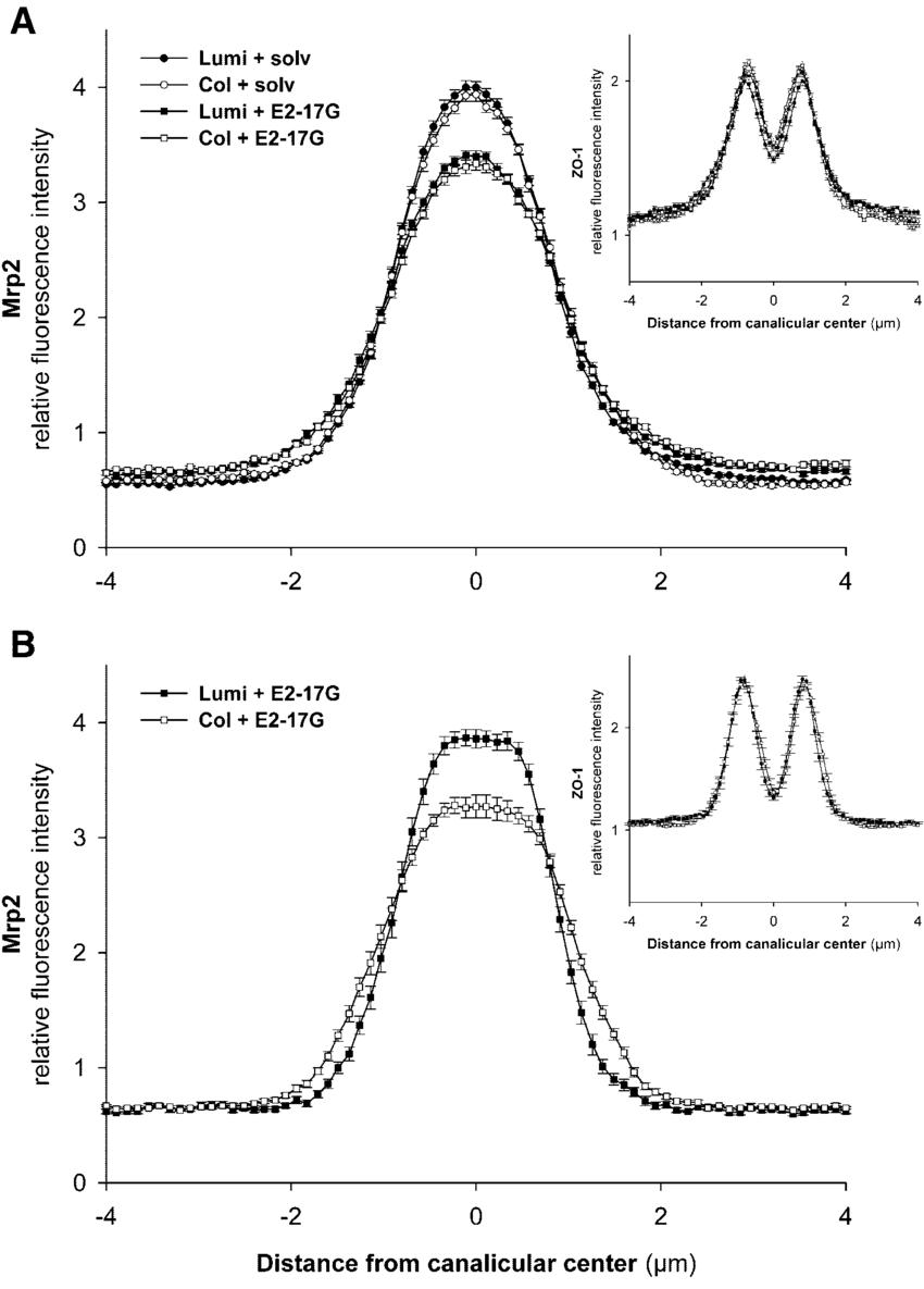 medium resolution of immunofluorescent intensity analysis of fluorescence profiles ofimmunofluorescent intensity analysis of fluorescence profiles of mrp2 download scientific