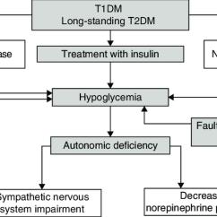 Venn Diagram Type 1 And 2 Diabetes 2006 Yfz 450 Wiring Pathophysiology Great Installation Of Unaware Hypoglycemia T1dm Rh Researchgate Net Mellitus