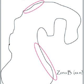 Ejemplo de especies invasoras. A) Espinillo (Ulex europeus