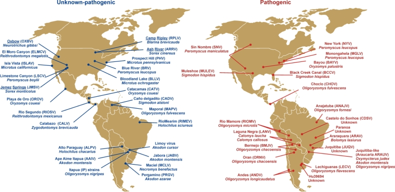 Map of hantavirus genotypes in the Americas reported to be ...