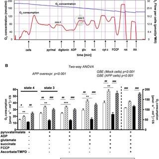 (PDF) Ginkgo Biloba Extract Ameliorates Oxidative