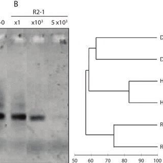 ladder braid diagram 1988 toyota pickup radio wiring comparison of genomic dna quality and yields by agarose gel... | download scientific
