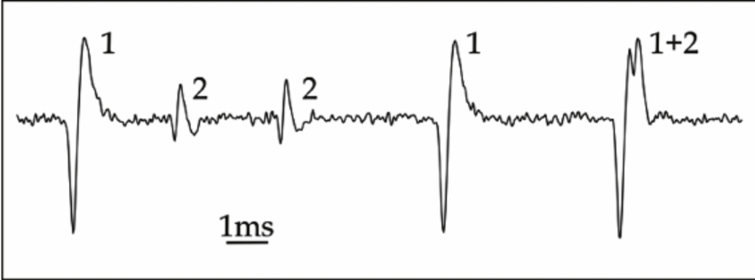 Example of a multi-unit recording: Spike waveforms of two