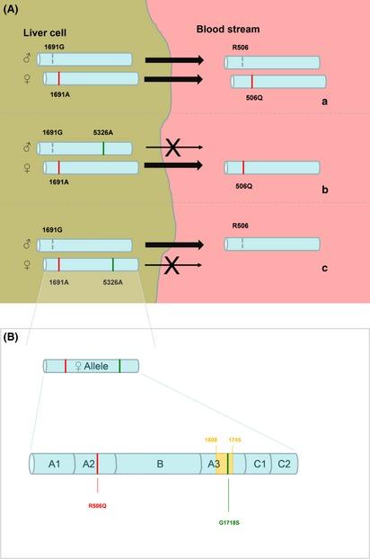 A B) Co-inheritance of heterozygous factor V Leiden ...