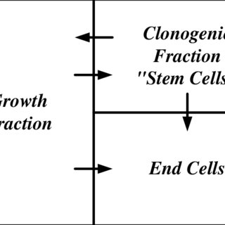 Graphs of the solutions to (1) for the three growth rate