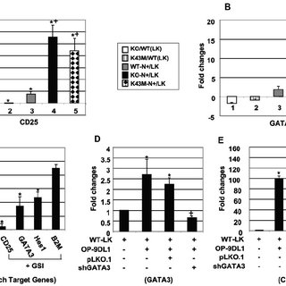 Alteration in DN subsets and in CD25 and CD44 expression