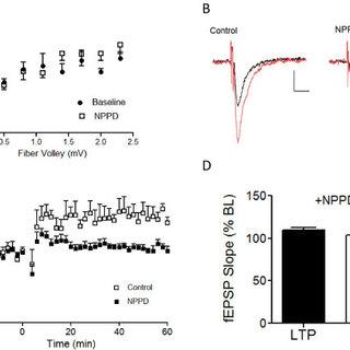 NMDA receptor-independent LTP is unimpaired in Kal7KO