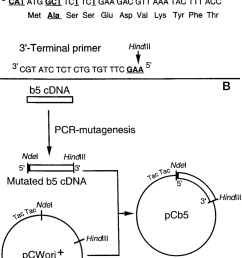 preparation of the house fly cyt b 5 cdna for expression in e coli a download scientific diagram [ 850 x 1176 Pixel ]
