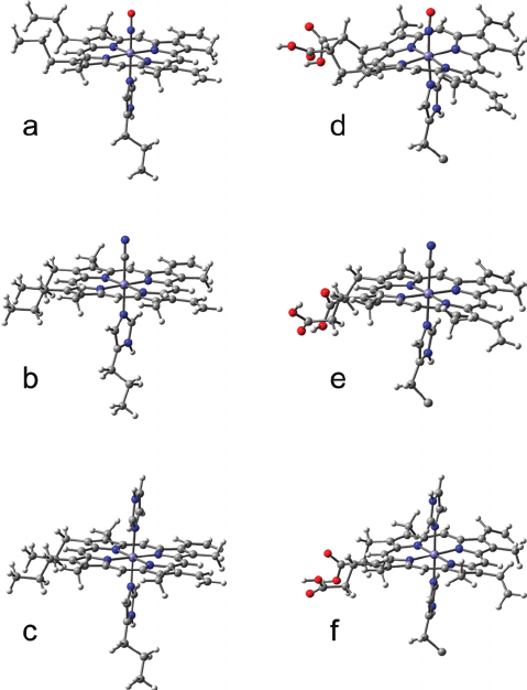 Optimized structures of the heme group and its ligand of