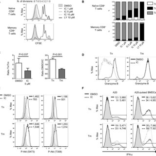 Inactivation of p110δ Inhibits Allogeneic Human T Cell