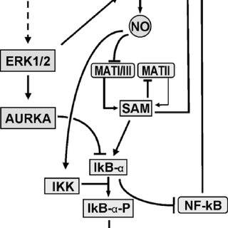 Schematic representation of RAS-GTP activated pathways