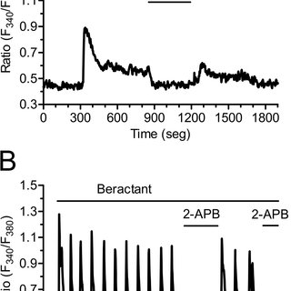 Beractant releases Ca 2+ from intracellular stores by