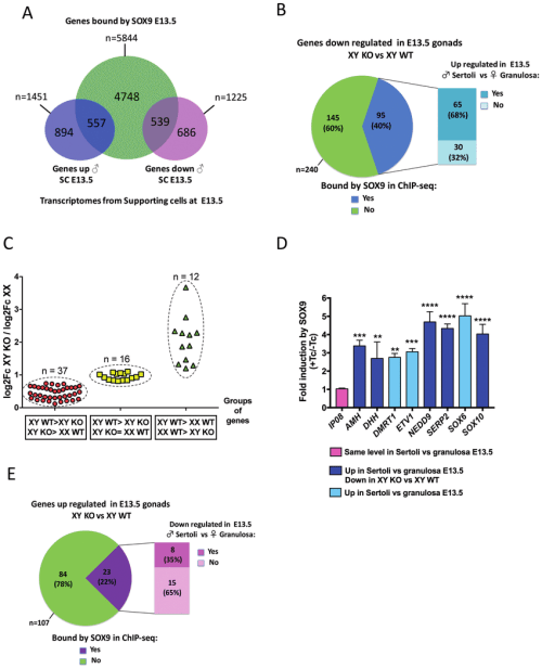 small resolution of sox9 role in the expression of its target genes in foetal testis a venn