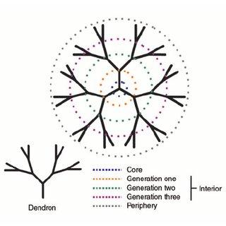 Anatomy of a dendrimer. A dendrimer and dendron are