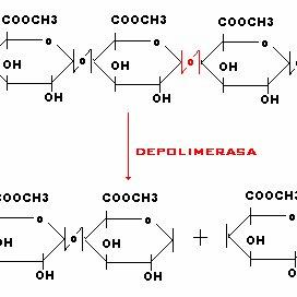 (PDF) Inmovilización de pectinasas y/o celulasas y