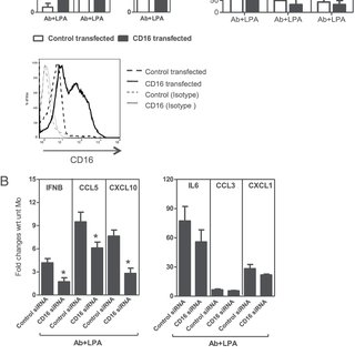 TLR4 regulates NF- κ B activation in a MyD88-independent