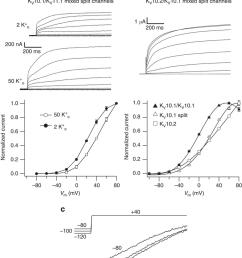 hybrid split channels yield voltage dependent currents a download scientific diagram [ 850 x 1156 Pixel ]
