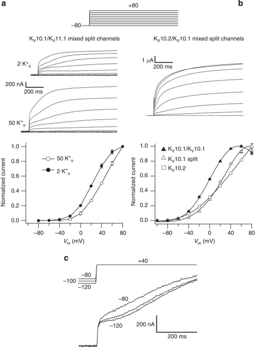 small resolution of hybrid split channels yield voltage dependent currents a download scientific diagram