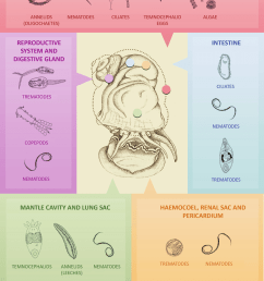 the main taxonomic groups associated with various parts of the body and shell of apple snails [ 850 x 1214 Pixel ]