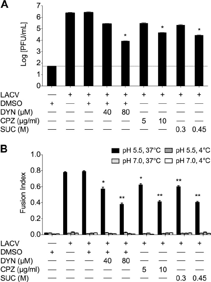 Productive infection of LACV is dependent on dynamin- and