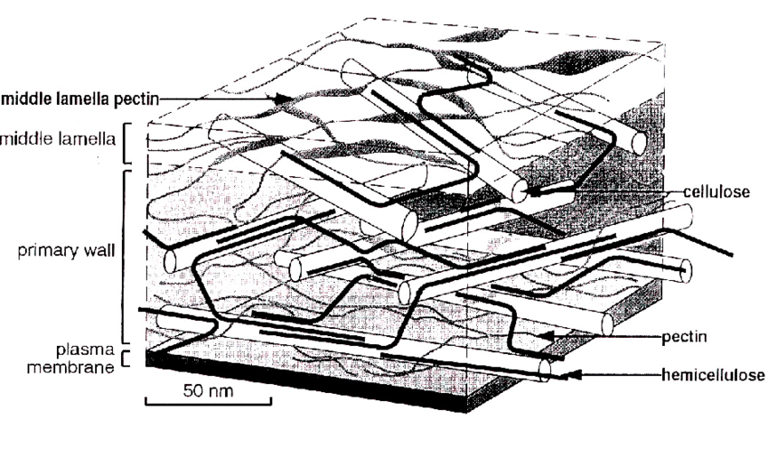 Simplified and Schematic Representation of the