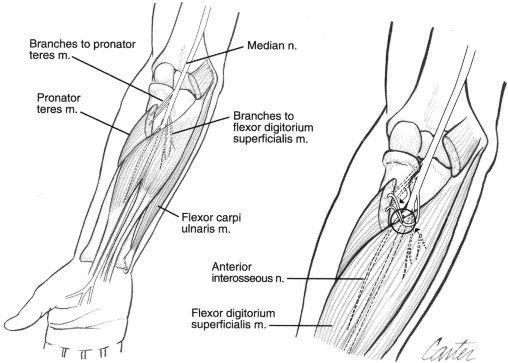 ulnar nerve diagram pioneer parking brake bypass wiring anatomy at the elbow download scientific