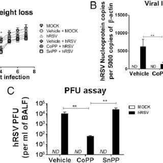 (PDF) Heme Oxygenase-1 Modulates Human Respiratory