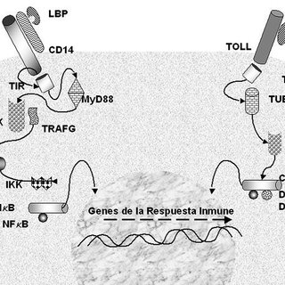 (PDF) Antimicrobial peptides: A defense mechanism with