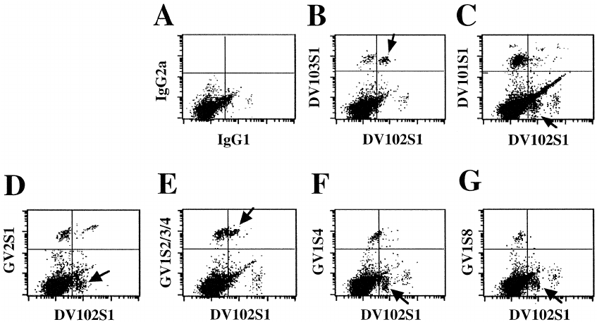 Two-colour FCM analysis of TCRDV and TCRGV regions in