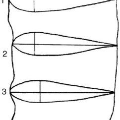Polar Bear Fur Diagram 7 3 Powerstroke Glow Plug Wiring 2 Sea Otter Showing Paddle-like Hind Feet. | Download Scientific