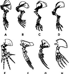 skeleton of left pectoral limbs of aquatic mammals including a sea download scientific diagram [ 850 x 930 Pixel ]