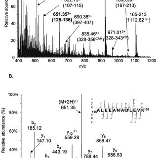 MS analysis of tryptic peptides from spot P12. Panel A