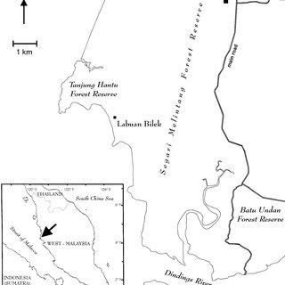 (PDF) Behavior and Ecology of Wild Slow Lorises