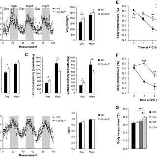 Loss of COX6A2 protein (ΔCOX6A2) in complex IV enhances