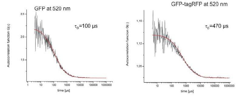 Fluorescence correlation curve of eGFP at a concentration