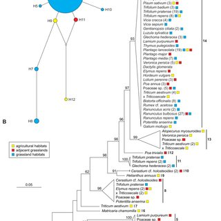 (PDF) Communities of Endophytic Sebacinales Associated