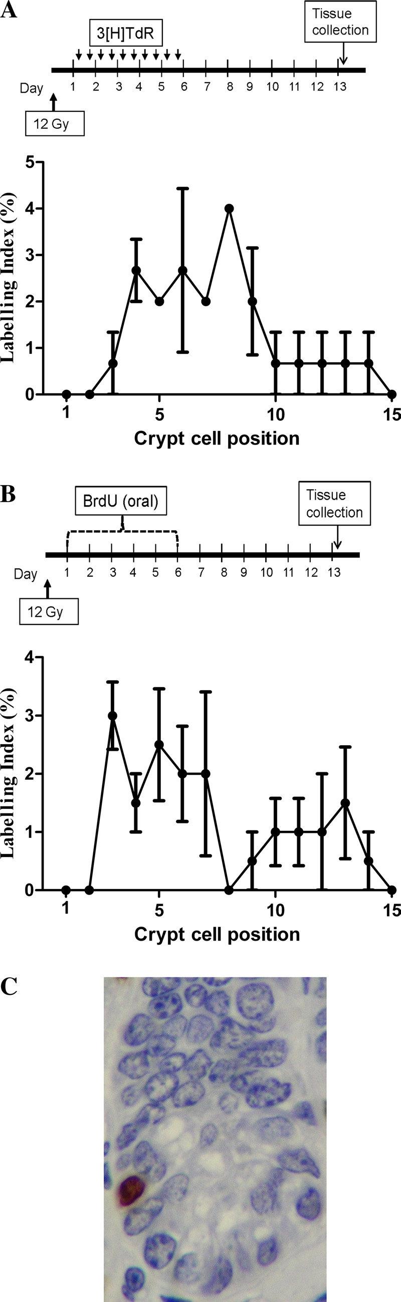 medium resolution of dna label retaining cells lrcs in the small intestine download scientific diagram