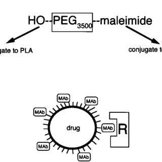 (PDF) Synthesis of PEGylated immune nanoparticles