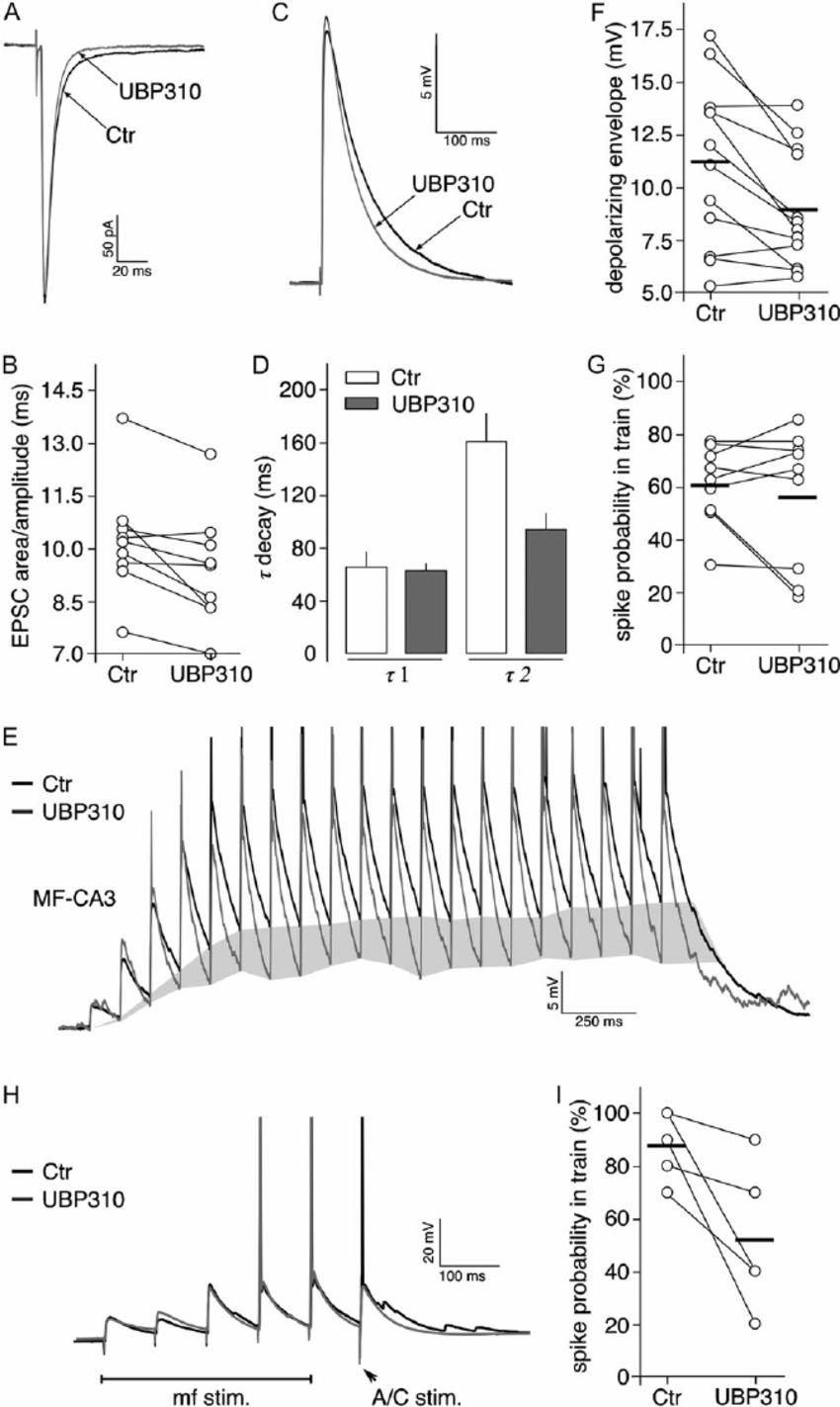 Participation of postsynaptic KARs to mf-CA3 synaptic