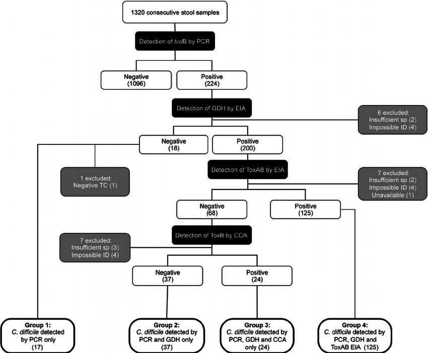 Flow chart of laboratory diagnosis of Clostridium