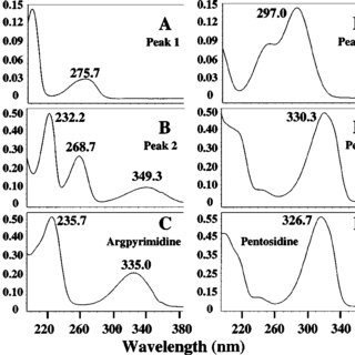 HPLC chromatograms of pure acetyl forms of peak 1 (A) and